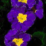 Zur Galerie Blumen