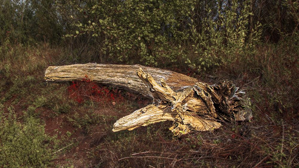 hsbm foto erlensee mkk totholz am ruhlsee